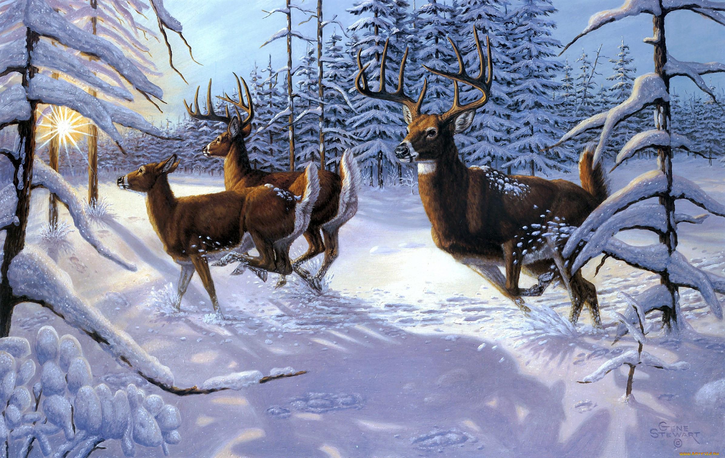 обои на рабочий стол олени в зимнем лесу щуку